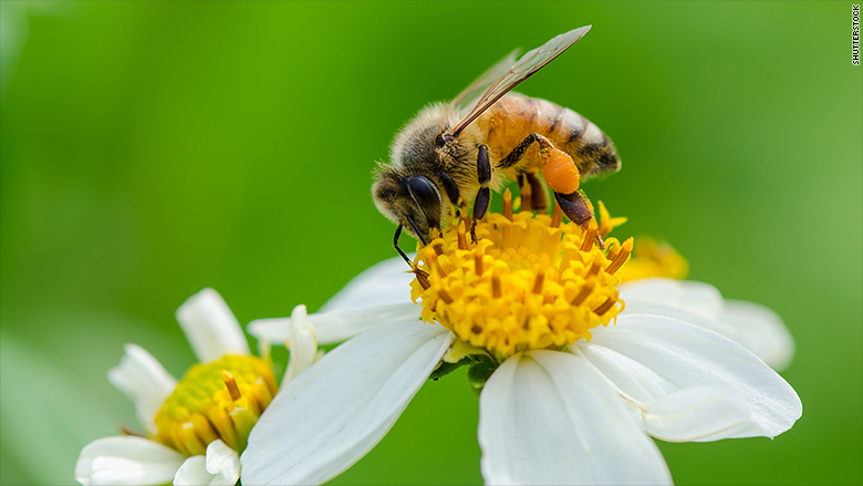 Just heard the buzz