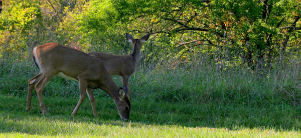 SM Mission Park deer 'cull' continues