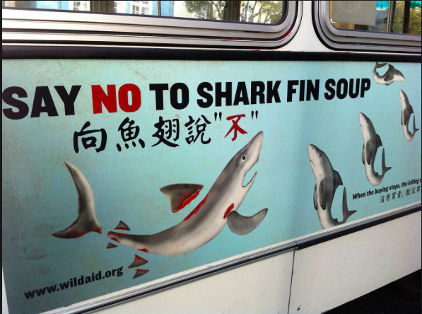 Say No To Shark Fins    One hundred million sharks suffer from their fins being removed and used in food products like sharp fin soup. Once their fins are removed, the sharks are dumped back in the ocean where they suffocate because they must swim to breathe or die as they are eaten alive.